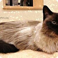 Adopt A Pet :: Heidi - Overland Park, KS