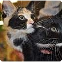 Adopt A Pet :: Fiona - Putnam Valley, NY