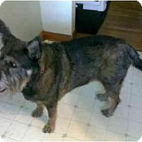 Adopt A Pet :: Marvin - Racine, WI