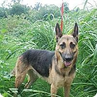Adopt A Pet :: Tamithia - Albany, NY