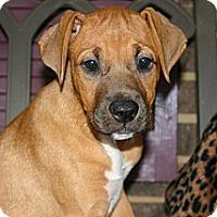 Adopt A Pet :: Alice - Huntsville, AL