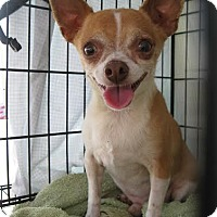 Adopt A Pet :: Perry - Phoenix, AZ