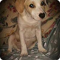 Adopt A Pet :: Spot - Marlton, NJ