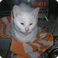 Adopt A Pet :: Bianca - Caistor Centre, ON