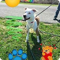 Adopt A Pet :: Lex - Homer, NY