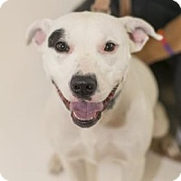 Adopt A Pet :: Paige - Niagara Falls, NY