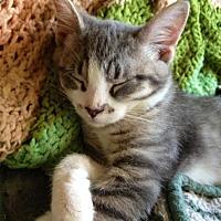 Adopt A Pet :: Pete - Browns Mills, NJ
