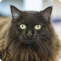 Adopt A Pet :: Phyllis - Burlingame, CA