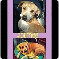 Adopt A Pet :: Journee - Milton, GA