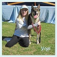 German Shepherd Dog/Collie Mix Dog for adoption in San Diego, California - Yogi
