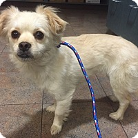 Adopt A Pet :: *URGENT* Gigi - Van Nuys, CA
