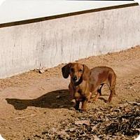 Adopt A Pet :: Buckley - Wheatland, WY