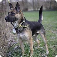 Adopt A Pet :: Baroness - Dayton, OH