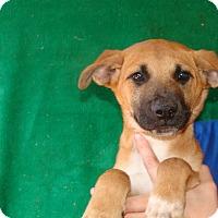 Adopt A Pet :: Fender - Oviedo, FL