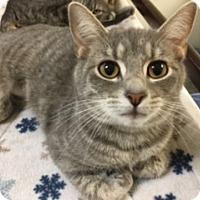 Adopt A Pet :: Shandy - Medina, OH