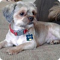 Adopt A Pet :: Max-ADOPTION PENDING!! - Rockville, MD