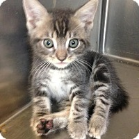 Adopt A Pet :: Stormy - East Brunswick, NJ