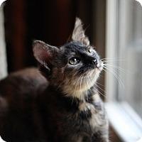 Adopt A Pet :: Autumn - Richmond, VA