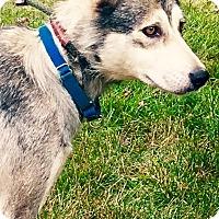 Adopt A Pet :: Blossom - Zanesville, OH