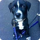Adopt A Pet :: Major