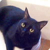 Adopt A Pet :: Black Jack - Phoenix, AZ