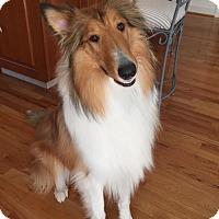 Adopt A Pet :: Winnie - Chantilly, VA