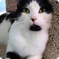 Adopt A Pet :: Jasmine - Fairfax, VA