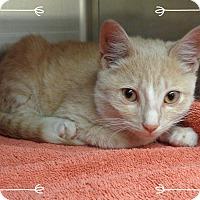 Adopt A Pet :: TORRES - available 12/8 - Marietta, GA