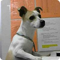 Adopt A Pet :: *CHESTER - Sacramento, CA