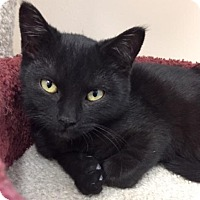 Adopt A Pet :: Kitten Tilly - Seal Beach, CA