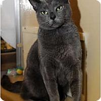 Adopt A Pet :: Chrissy - Farmingdale, NY