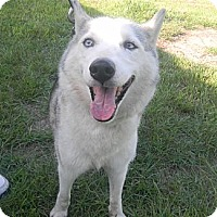 Adopt A Pet :: Sky - Orange Park, FL