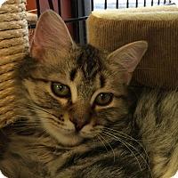 Adopt A Pet :: Penelope - Bear, DE