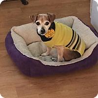 Adopt A Pet :: Bounce - Wilmington, DE