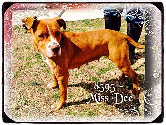 Pit Bull Terrier Mix Dog for adoption in Dillon, South Carolina - Miss Dee