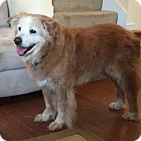 Adopt A Pet :: Cinnamon II - BIRMINGHAM, AL