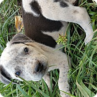 Adopt A Pet :: Speckles - grants pass, OR