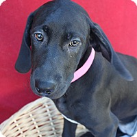 Adopt A Pet :: Abuela - Waldorf, MD