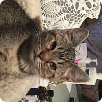 Adopt A Pet :: Bret - Kelso/Longview, WA