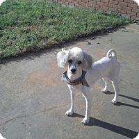 Adopt A Pet :: Bama (Owner Surrender) - Philadelphia, PA