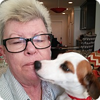 Adopt A Pet :: Lucy - Plain City, OH