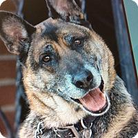 Adopt A Pet :: BRANDO VON NETOBAUM - Los Angeles, CA