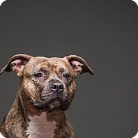 Adopt A Pet :: Carmella - Berea, OH