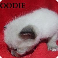 Adopt A Pet :: Goodie - Batesville, AR