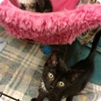 Adopt A Pet :: Jon - Land O Lakes, FL