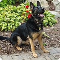 Adopt A Pet :: Danica(CL) - Greensboro, NC