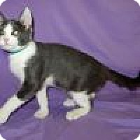 Adopt A Pet :: Hansel - Powell, OH