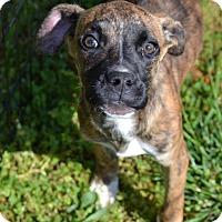Adopt A Pet :: Jude - Albemarle, NC