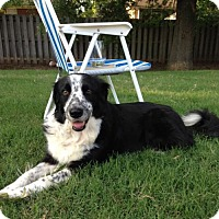 Border Collie Mix Dog for adoption in Mobile, Alabama - *Heidi (senior)