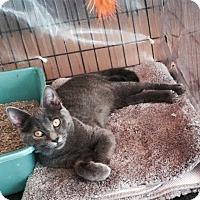 Adopt A Pet :: Norma - Rock Hill, SC
